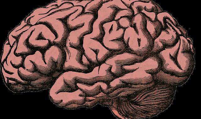 L'impact des langues sur le cerveau et Alzheimer
