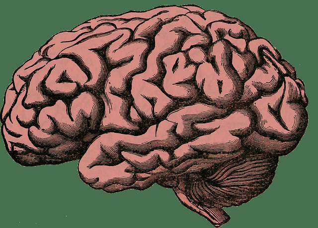 Apprendre une langue étrangère ralentit l'arrivée d'Alzheimer !