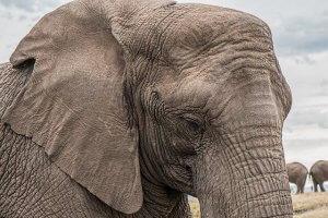 Apprendre une langue permet d'avoir une mémoire d'éléphant !
